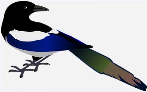 Svraka ukrašena paunovim perjem: Bajke za djecu