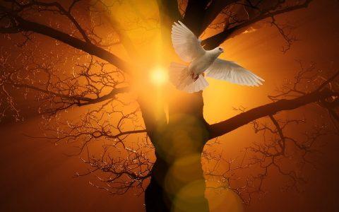 Djela apostolska 24: Biblija i Novi zavjet