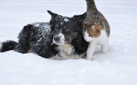 Životinje imaju PSI sposobnosti