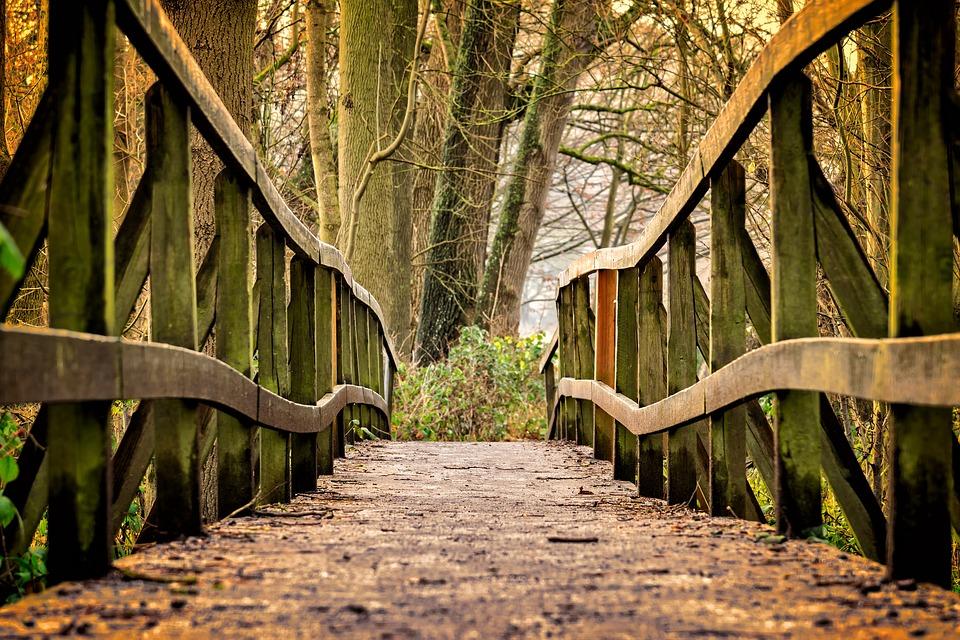 Drveni mostovi u šumi
