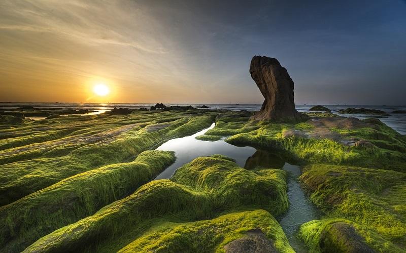 Slike prirode - alge i more