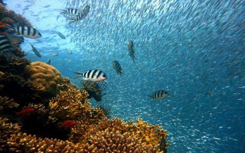 Morske ribe i druge morske životinje u morima svijeta
