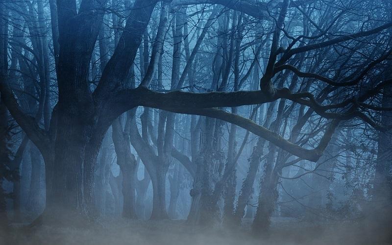 Mistične fotografije šume