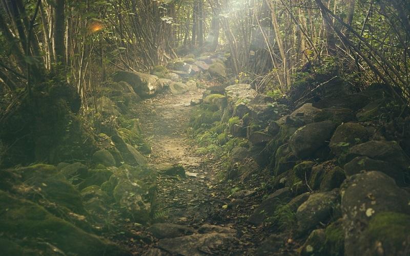 Prelijepe slike prirode - put kroz šumu