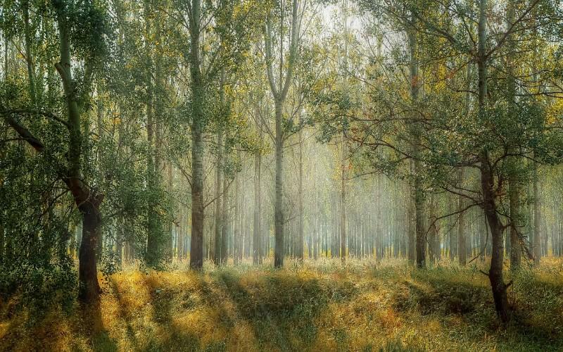 Slike prirode koje pomažu za opuštanje od stresa