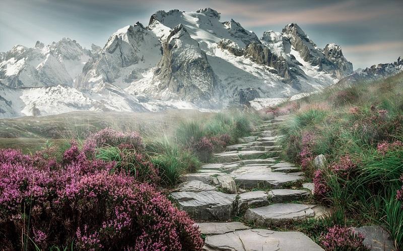 Fotografije planina i cvijeća