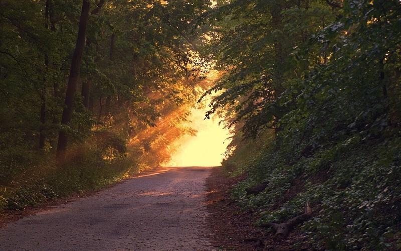 Najbolje slike prirode - šumski put
