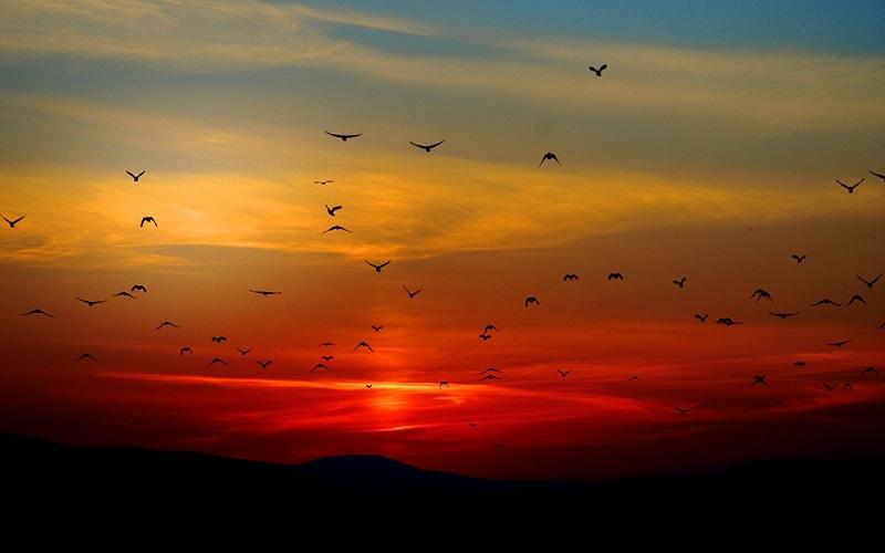 Fotografije ptica