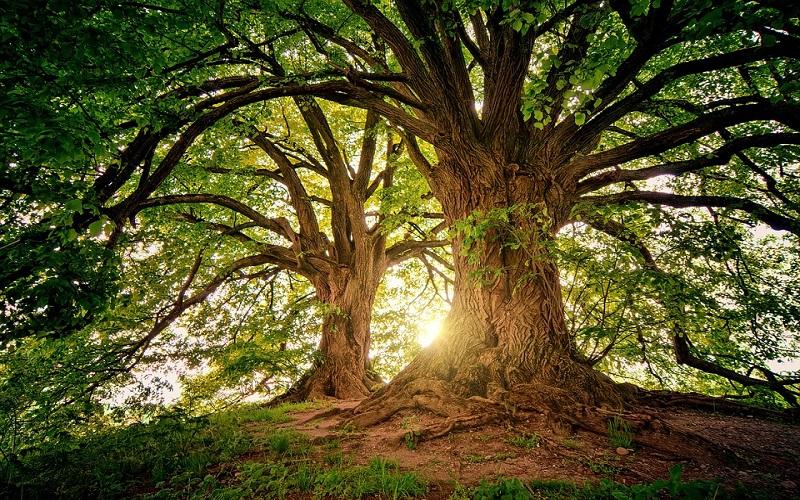 Slike prirode - drveće