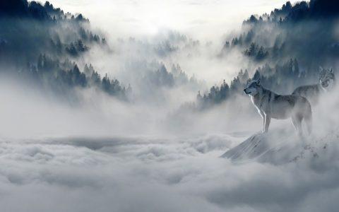 Divlje životinje u prirodi koje su oduvijek zanimljive