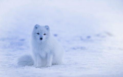 Zanimljivosti o životinjama za koje možda niste znali