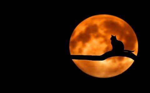 Zanimljivosti o mačkama za koje možda niste znali