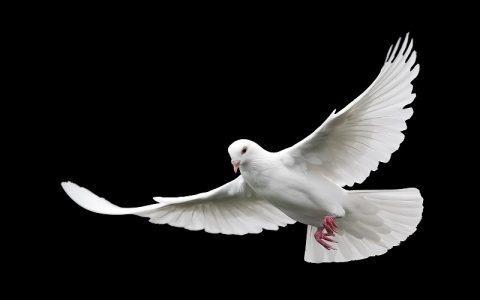 Imena za golubove koja mogu biti dobar izbor