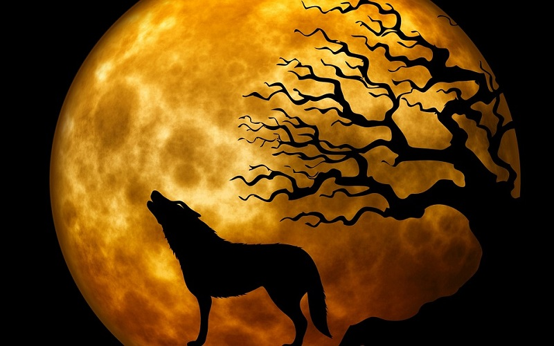 Vuk i lisica: Bajke za djecu i priče za laku noć