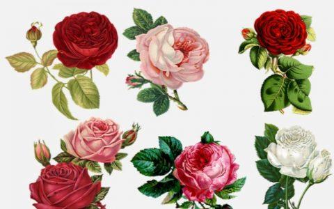 Citati o cvijeću koji će vas sigurno oduševiti
