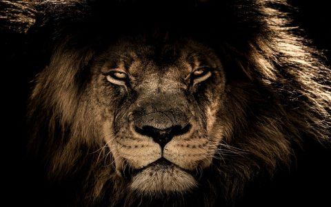 Zanimljivosti o lavovima koje vam možda nisu poznate
