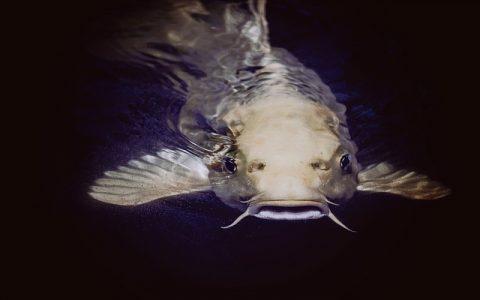 Zanimljivosti o ribama za koje možda niste znali
