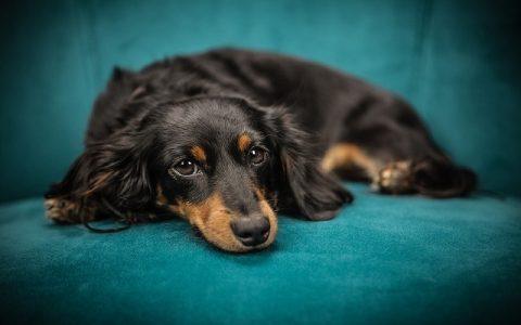 Zanimljivosti o psima za koje možda niste znali