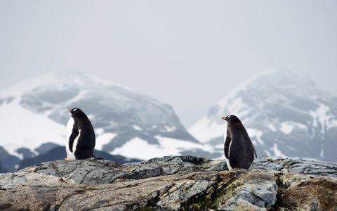 Zanimljivosti o pingvinima za koje niste znali