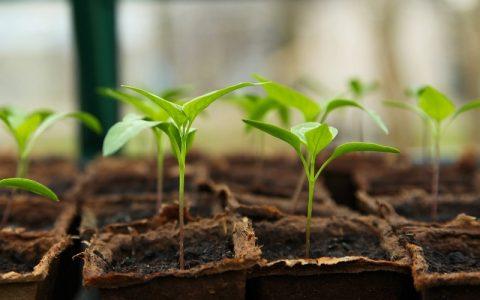 Proizvodnja povrća: Korisni savjeti za početnike