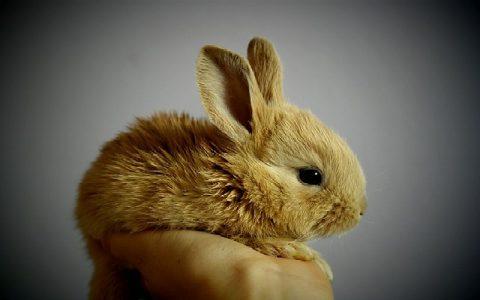 Kunići su životinje koje mogu biti idealni kućni ljubimci