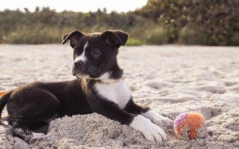 Igre sa psom su bitne da vaš ljubimac bude sretan