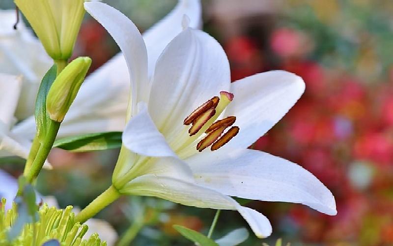 Sobne biljke koje čiste zrak: Korisni savjeti