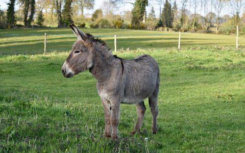Mudra priča o magarcu je jedna od ljepših priča